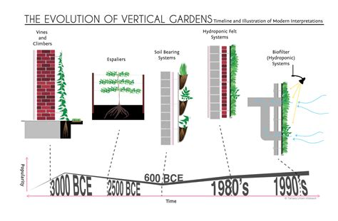 a history of vertical gardens from simple vines to