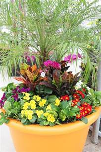 Tropical Planter Ideas by Planter With Tropical Plants Tropical Plants
