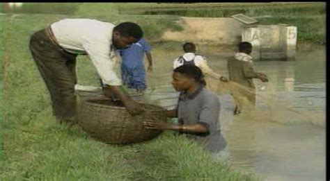 sle of a business plan on catfish farming water spouts blog catfish farming business in nigeria by