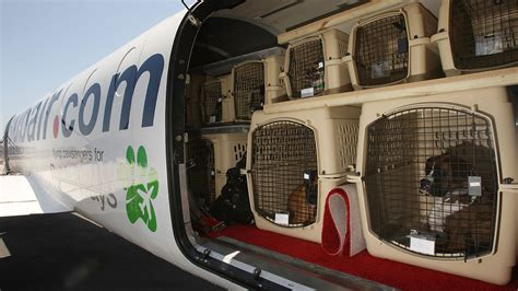 after 74 deaths in a decade delta bans pets from checked like luggage marketwatch