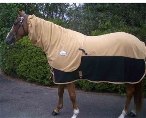 Cheap Fly Rugs For Horses by Rugs Cheap Roselawnlutheran