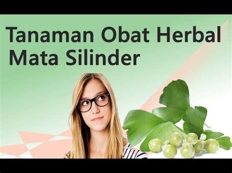tanaman obat herbal penyembuh mata silinder youtube