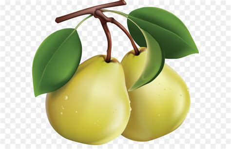 pear png image png    transparent