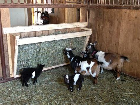 hay racks for goats goat hay feeder nigerian dwarf goats pinterest ray ban aviator christmas gifts and the