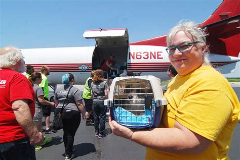free puppies delaware pets for adoption arrive in delaware delaware free news