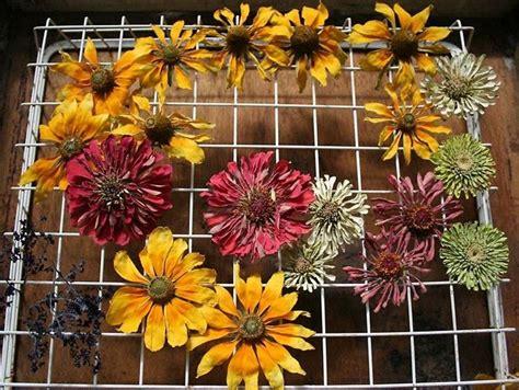 fiori recisi significato fiori recisi regalare fiori