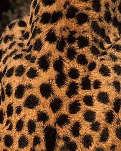 Karpet Jaguar barakartika desain kulit berbulu cheetah kuning dan merah