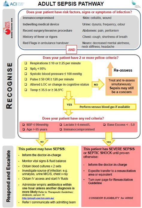 sepsis flowchart sepsis pathway images search