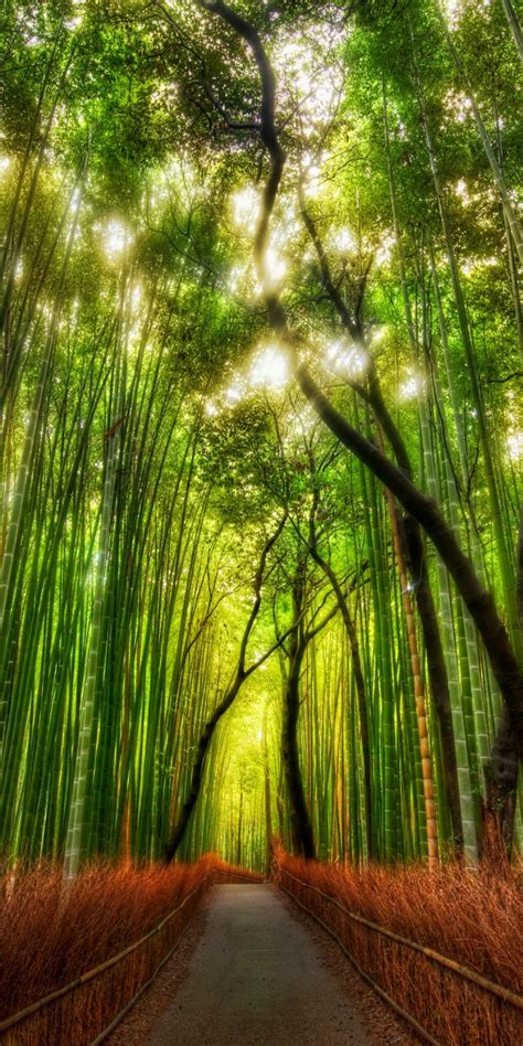 forest bamboo path trey ratcliff