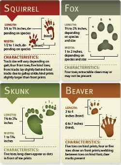 printable animal track cards printable flash cards for cub scouts just b cause