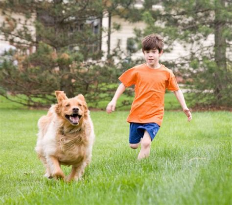 where can i play with puppies and puppies must learn appropriate play toronto
