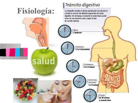 alimentos para bajar barriga como perder barriga los mejores alimentos para bajar la