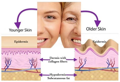 Collagen Skin are collagens able to aging process collagen pro