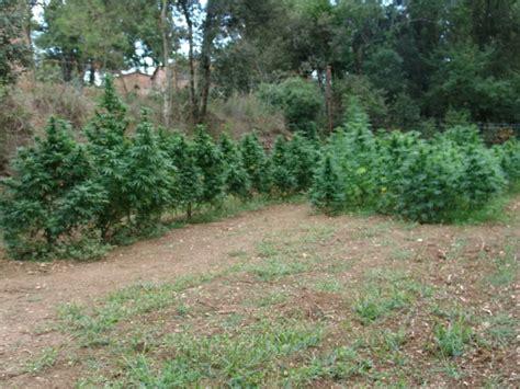 Exceptional Serre De Jardin De Qualite #7: 1-cultivo-en-suelo-910x6821.jpg