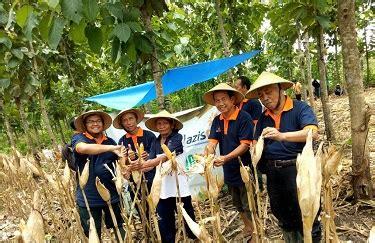 Bibit Jagung Pertiwi lazismu ums panen jagung pertiwi 6 di sragen menara62