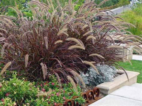 beautify your garden with beautiful ornamental grasses