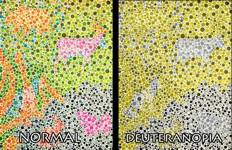 are all animals color blind color blind test for with animals