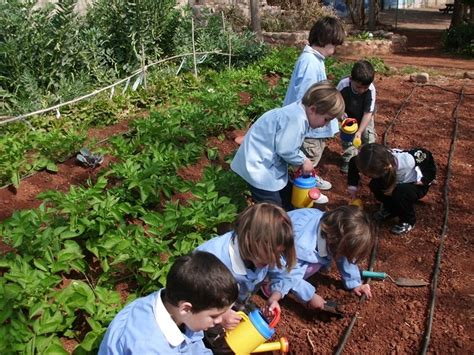 imagenes huertas escolares microdonaciones para huertos escolares ecol 243 gicos