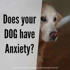 golden retriever separation anxiety 1000 images about treat anxiety on