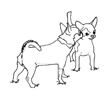 cute chihuahua coloring pages pin dog mating pages on pinterest