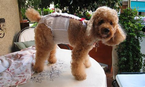 diapers for females in heat do rites disposable doggie diapers premium disposable diapers tailored made to fit a