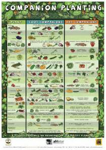 Types Of Lettuce To Grow In Garden - 12 companion plants to grow with your tomatoes