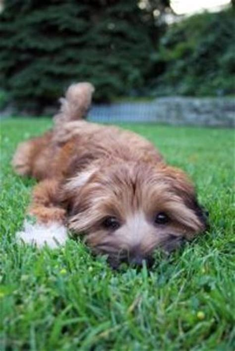 when to take puppy outside to potty fastest way to potty a puppy the daily puppy