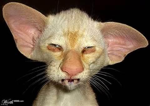 damn ugly cats