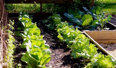 fall veggie garden how to prepare for your fall vegetable garden