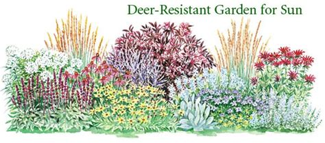 17 best images about shrub borders on pinterest gardens perennial grasses and hedges