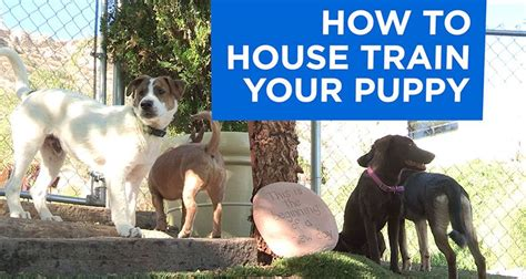 best way to housebreak a puppy how to your puppy with pictures wikihow autos post