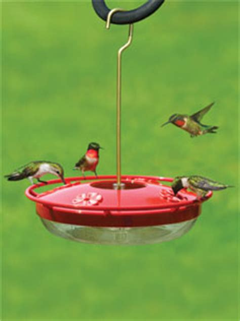 wbu high perch hummingbird feeder 12 oz