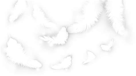 White Free - white feathers wallpaper wallpaper wide hd