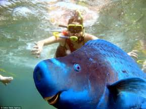 This Fish Looks Like A Hilarious Images Show The Smiles In The Animal Kingdom Daily Mail