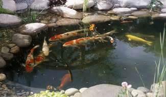 quels poissons pour un bassin ext 233 rieur animalerie