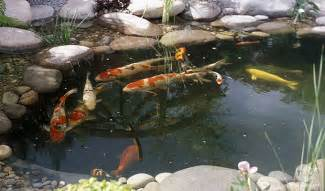 achat poisson bassin de jardin bassin de jardin