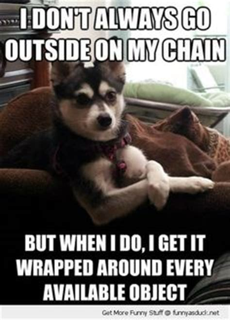 Annoyed Dog Meme - funny cat dog top 25 funniest cat and dog quotes
