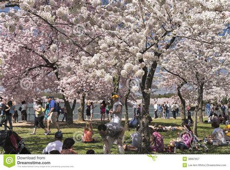 cherry blossom festival dc the cherry blossom festival in washington dc editorial photography image 38987657