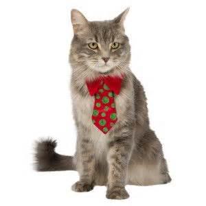 petsmart clothes whisker city 174 glitter cat tie clothes costumes petsmart aaaaaand fluff in a