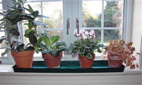 Best Indoor Window Sill Plants Large Windowsill Tray Plastic Tray Kinsman Garden