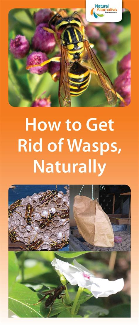 best 20 wasp spray ideas on spider repellant