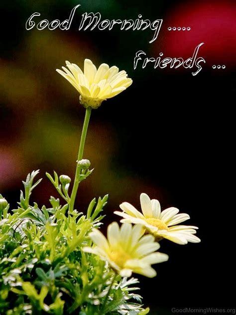 morning friends images morning friends images with flowers 30 beautiful