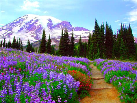 Flower Mountain flower field in the mountains hd wallpaper background