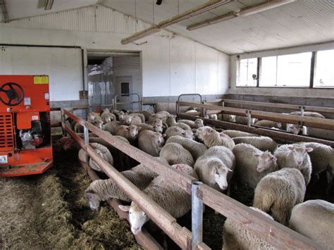 Volume 31 ? Number 3   Sheep Canada magazine