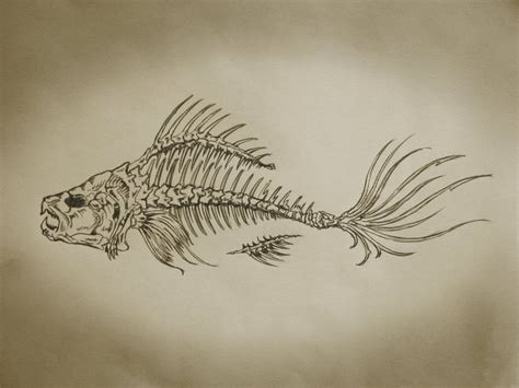 fish bones tattoo designs fish bones search a fish skeleton