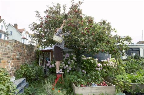 fruit trees recommended  south carolina hunker