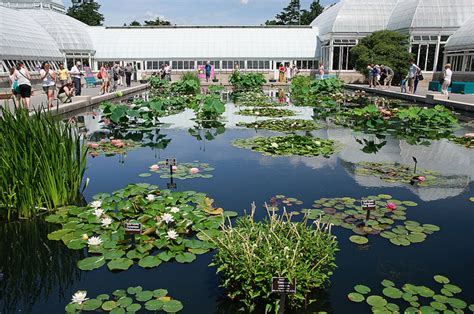 Ny Botanical Garden Address Water Lilies New York Botanical Garden Walks Of New York