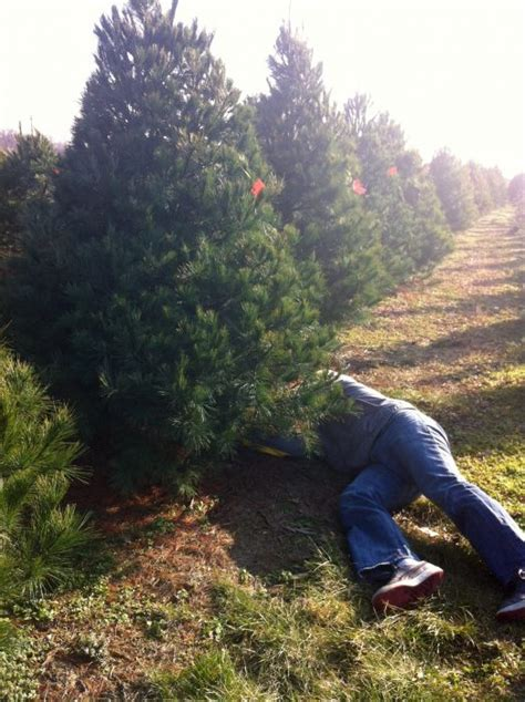 christmas tree farms in columbus and central ohio