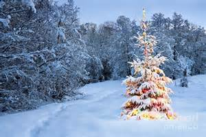 Beautiful christmas tree in snow is a photograph by boon mee which was
