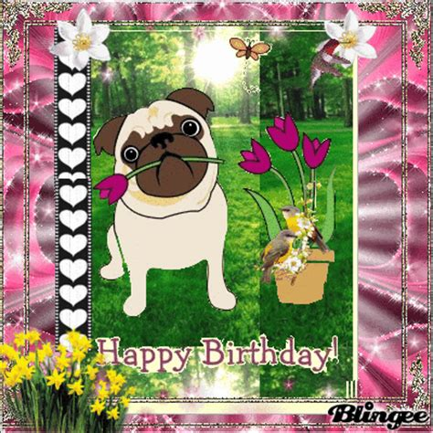 happy birthday pug gif birthday pug picture 122120056 blingee